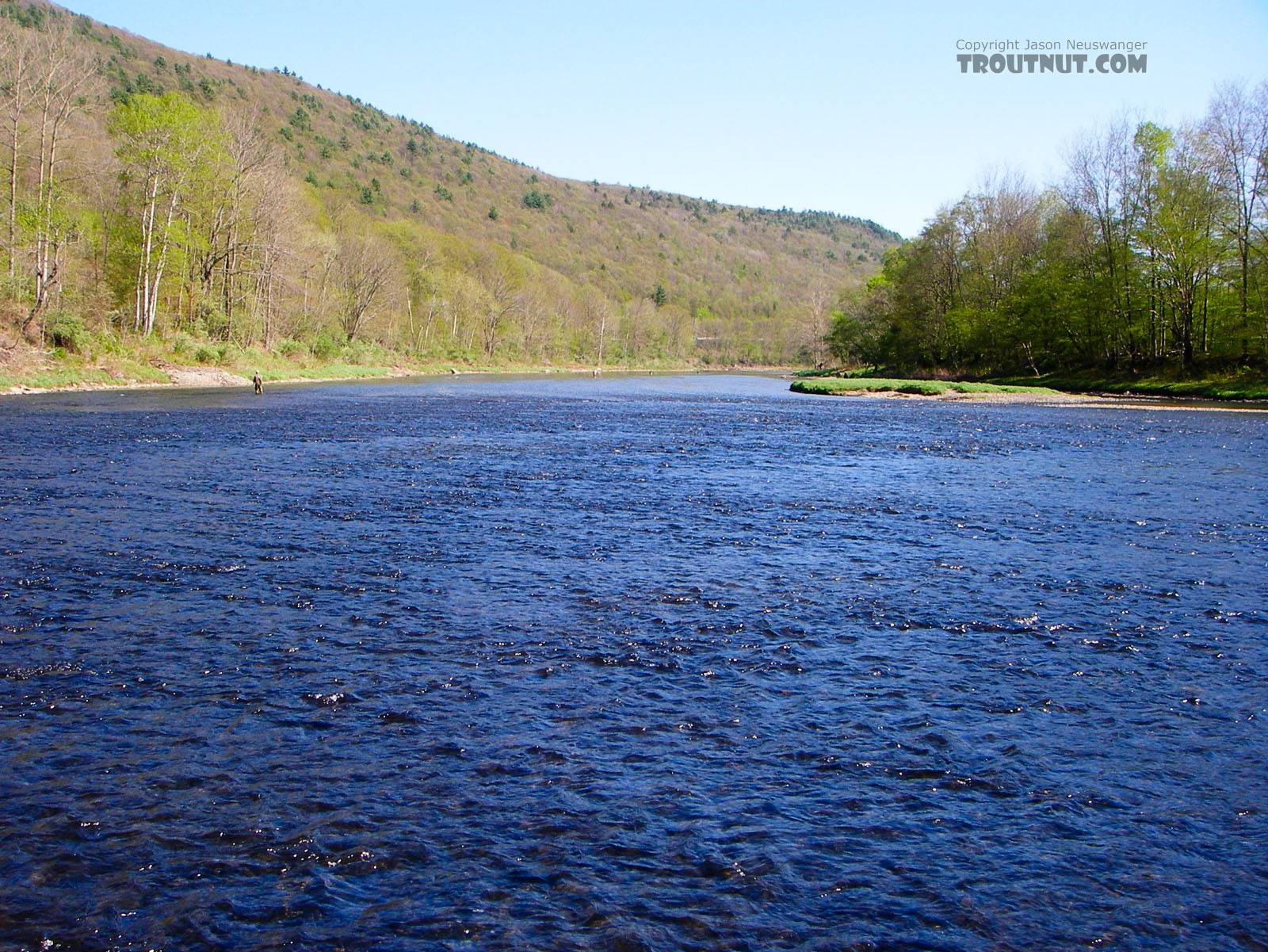 From the West Branch of the Delaware River in New York.