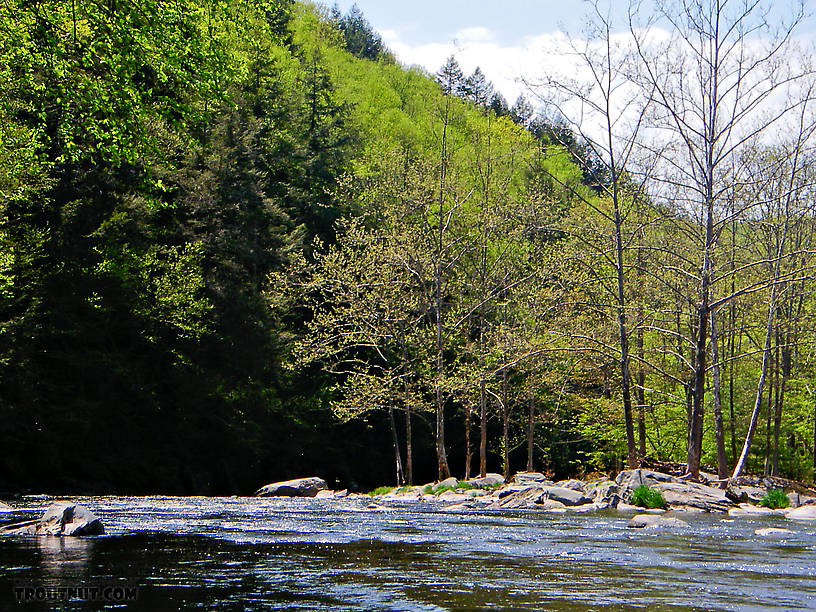 From the Neversink River Gorge in New York.