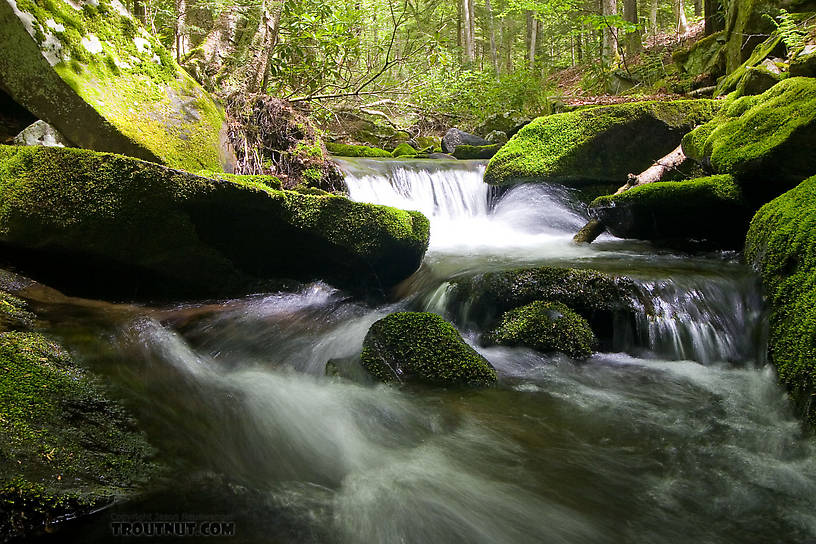 From Neversink Gorge (Wolf Brook) in New York.