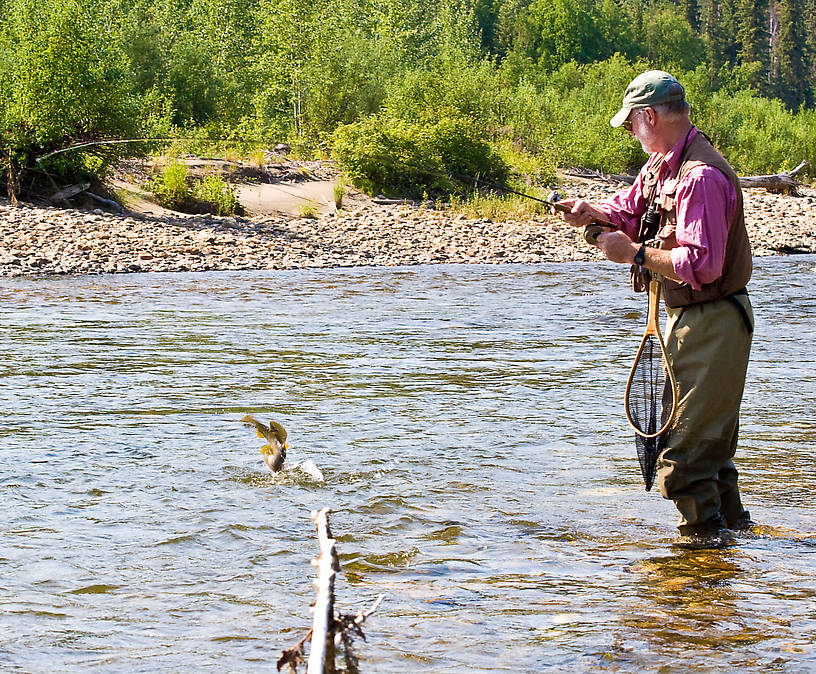 Here my dad's fighting a very nice arctic grayling, and this photo caught it mid-jump at the end of his line.  This one eventually shook the hook, but we both caught many more in the same size range. From the Chena River in Alaska.