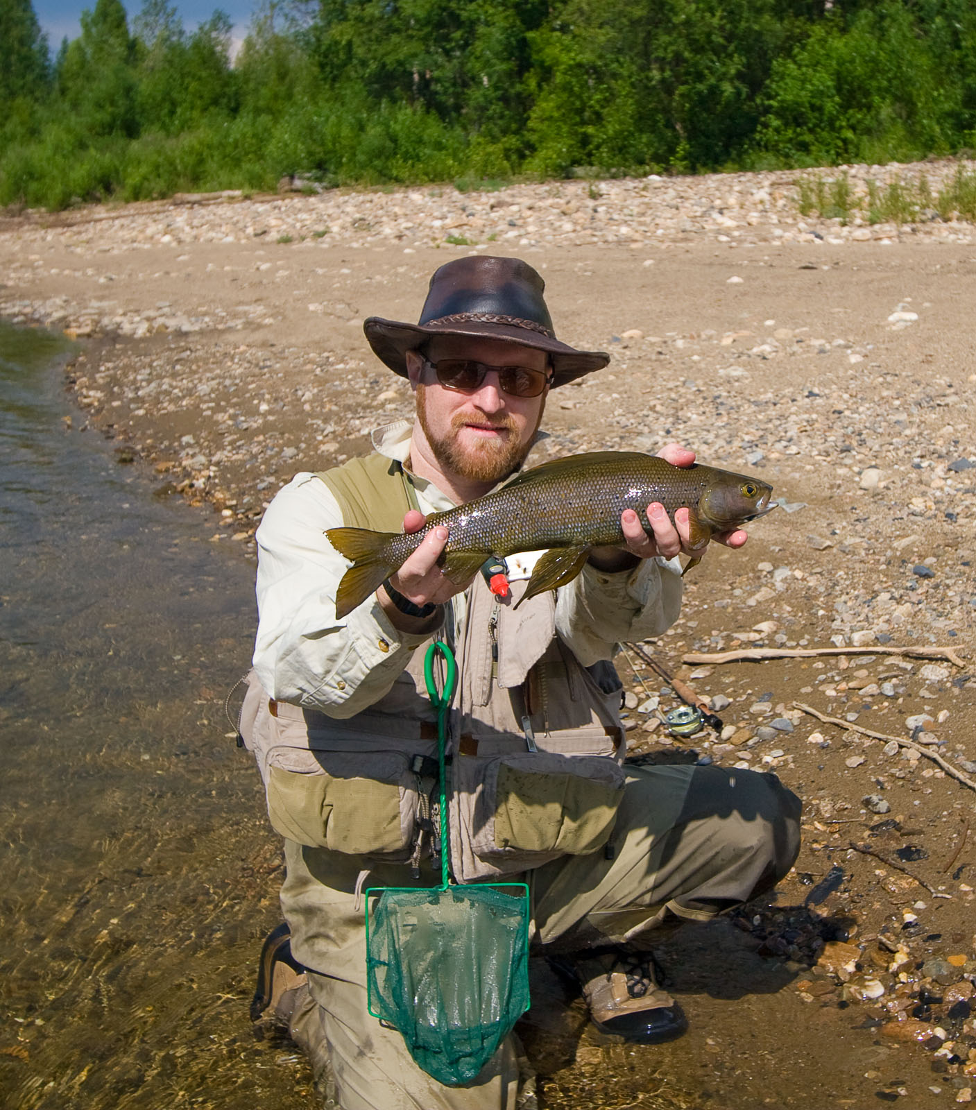 This is probably my largest grayling to date -- it's about 18 inches. From the Chena River in Alaska.