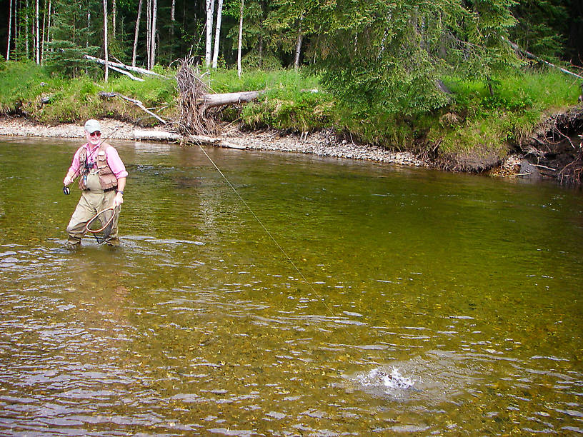 My dad fighting a grayling. From the Chena River in Alaska.