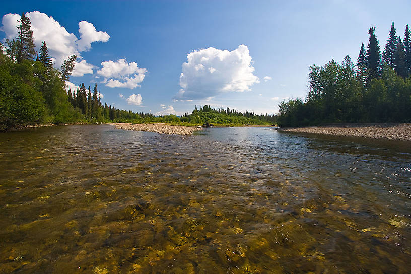Two major forks of this grayling stream come together in this pretty pool. From the Chena River in Alaska.