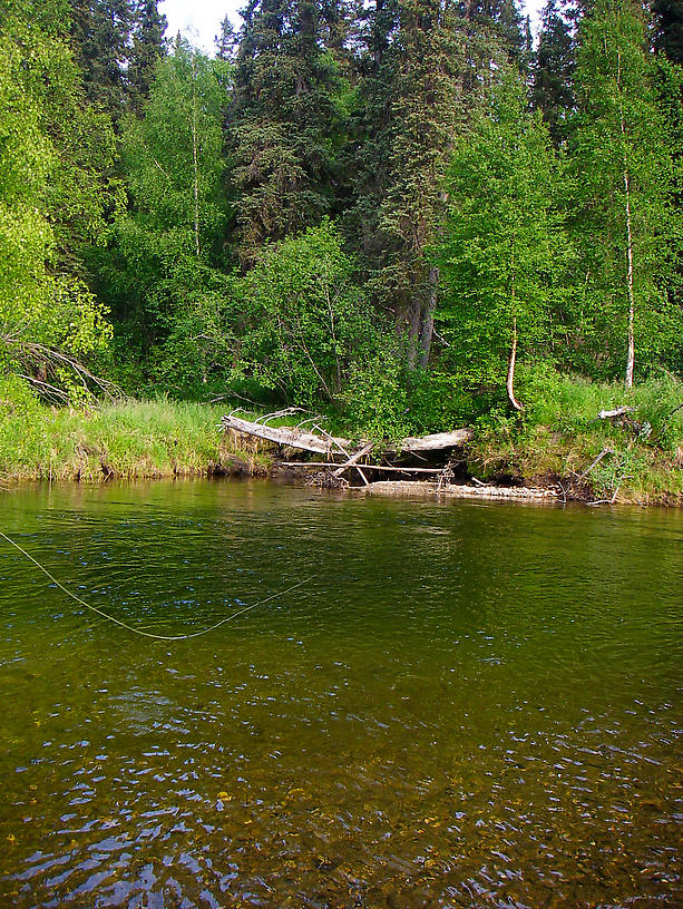 What a great place for a fly line to be! From the Chena River in Alaska.
