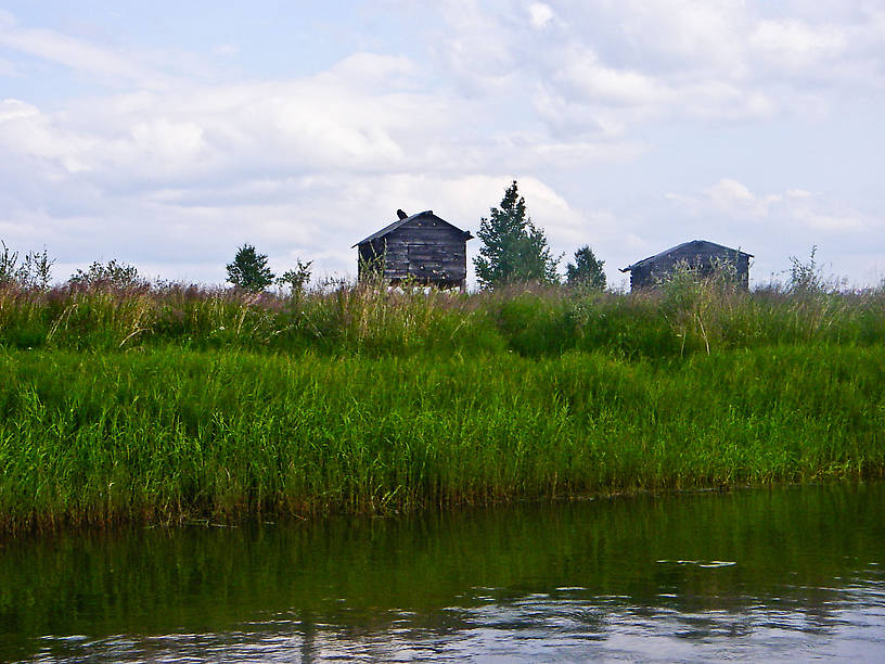 These caches are used by Alaskan natives to store supplies for pike-harvesting season in this network of sloughs and lakes.  That's a raven on top of the left one. From Minto Flats in Alaska.