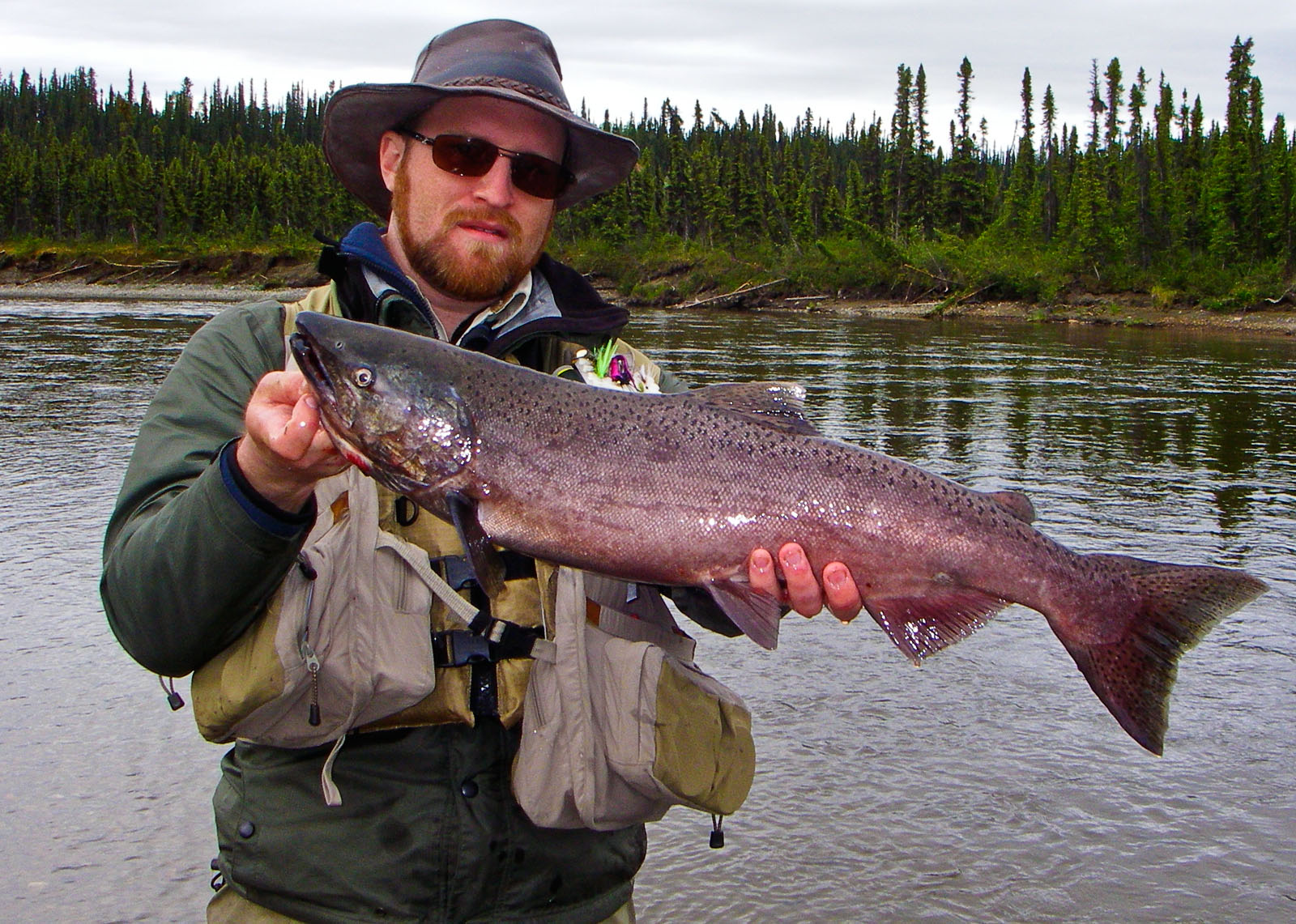 Here's my first Alaskan salmon, a small king that put up a fun fight. From the Gulkana River in Alaska.
