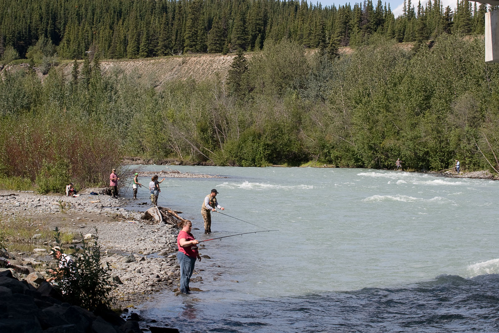 The lack of access on this large river makes combat fishing the norm for anyone who hasn't planned ahead and got a permit from the native tribe controlling the land above the river.  It's a choice between this and trespassing.  I fished for about 20 minutes before I got tired of it and headed to a different stream. From the Klutina River in Alaska.