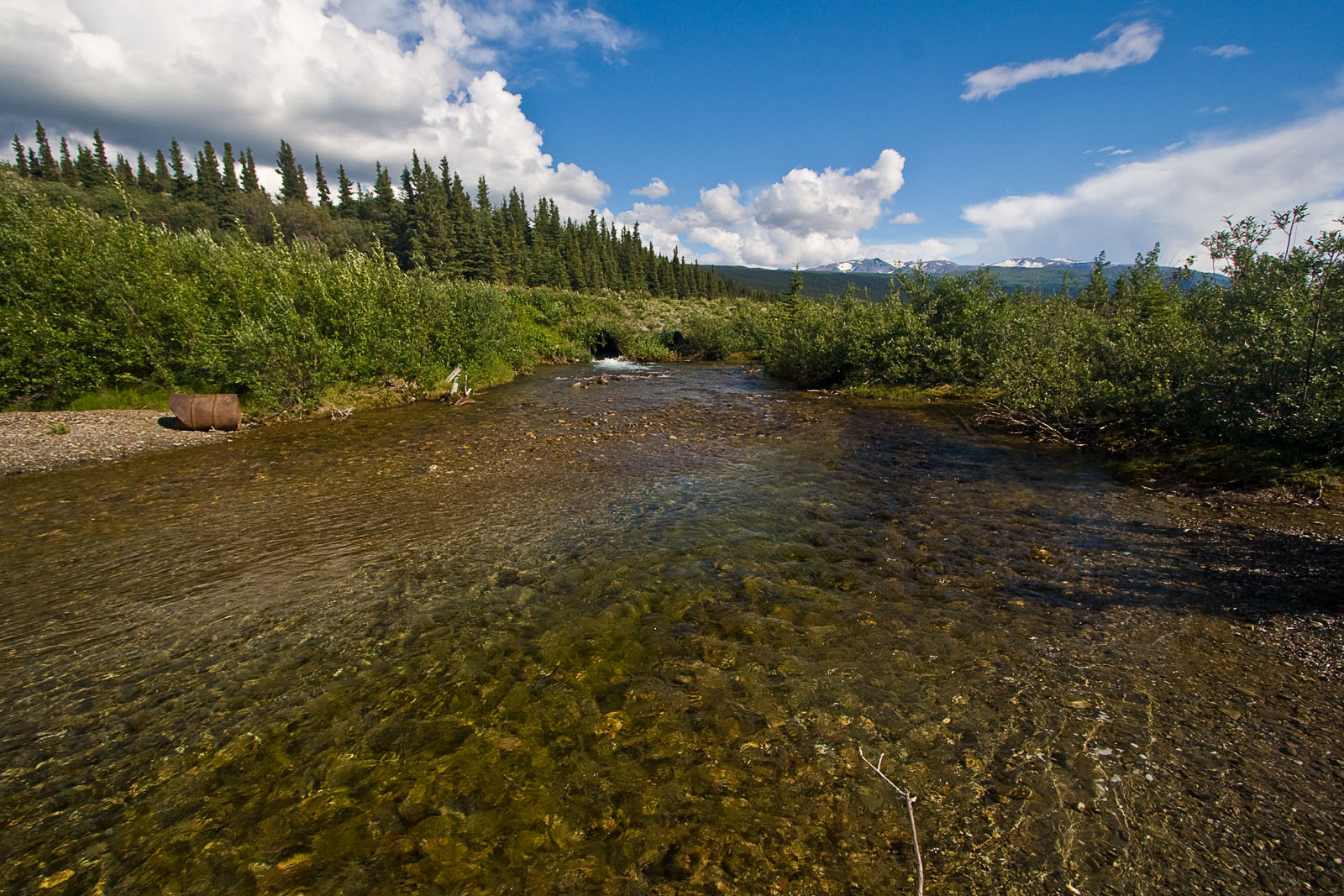From Donnelly Creek in Alaska.