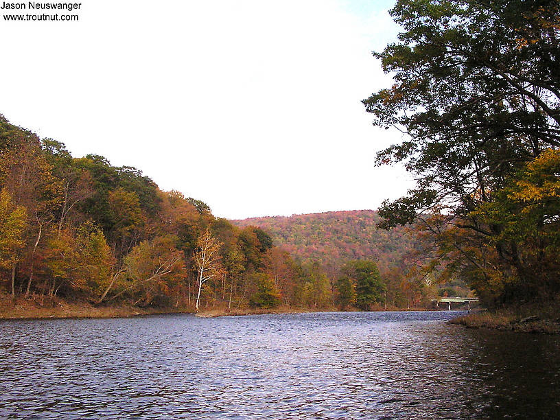 From the Beaverkill River in New York.