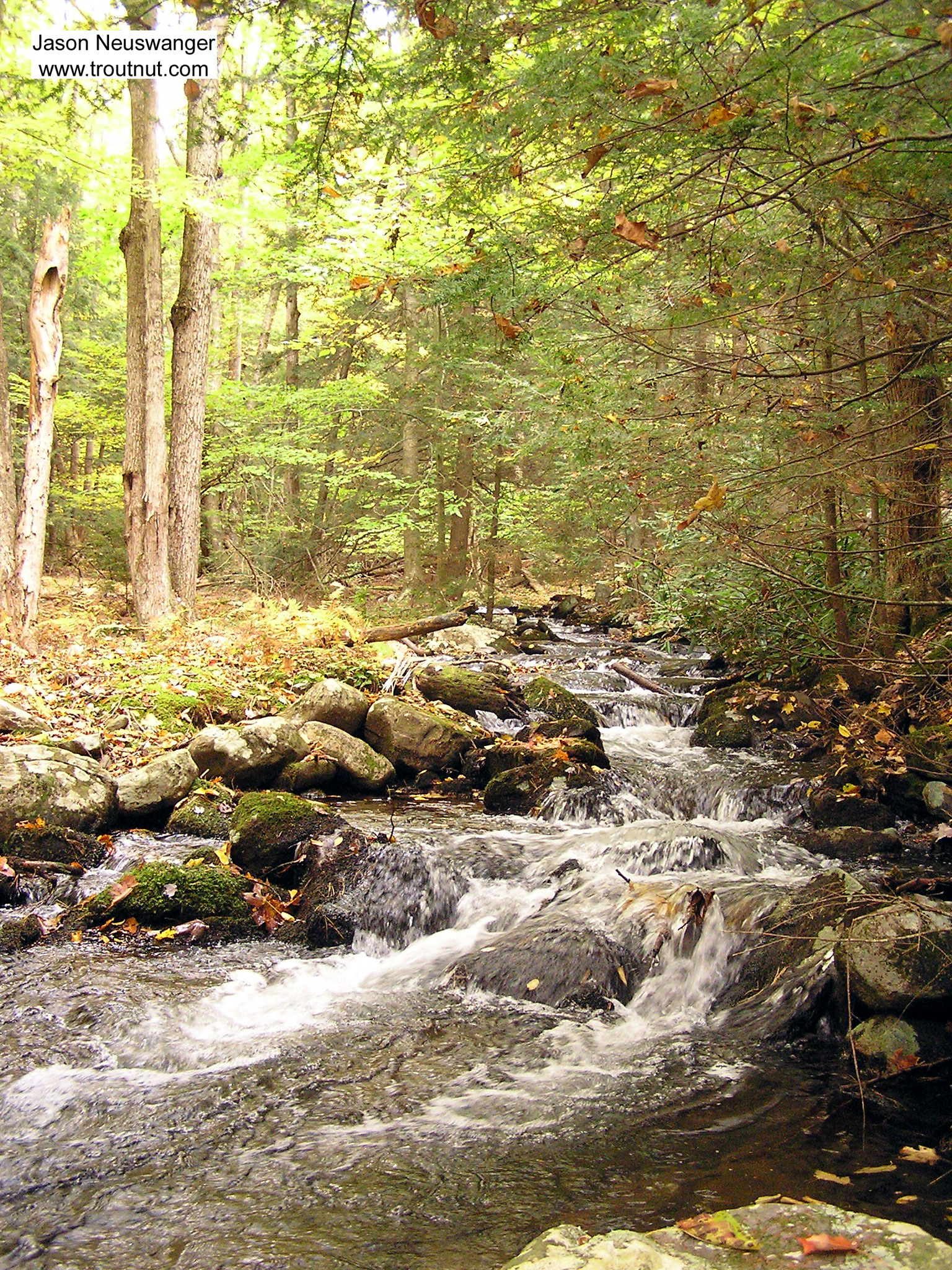 I love the look of this tiny wilderness stream in the Catskills.  It hasn't cut any sort of stream channel down into the ground.  Instead, it just bubbles down over the boulders on the surface of a hill. From Mullet Brook in New York.