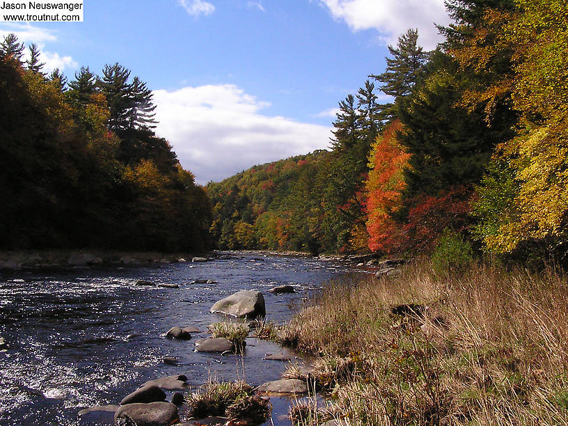 "This beautiful, remote stretch of one of the lesser-known large Catskill trout streams produced my only trout in two days of slow fishing, a 9 inch brown. Better than nothing! In fact, even ""nothing"" in this setting is really something! From the Neversink River Gorge in New York."