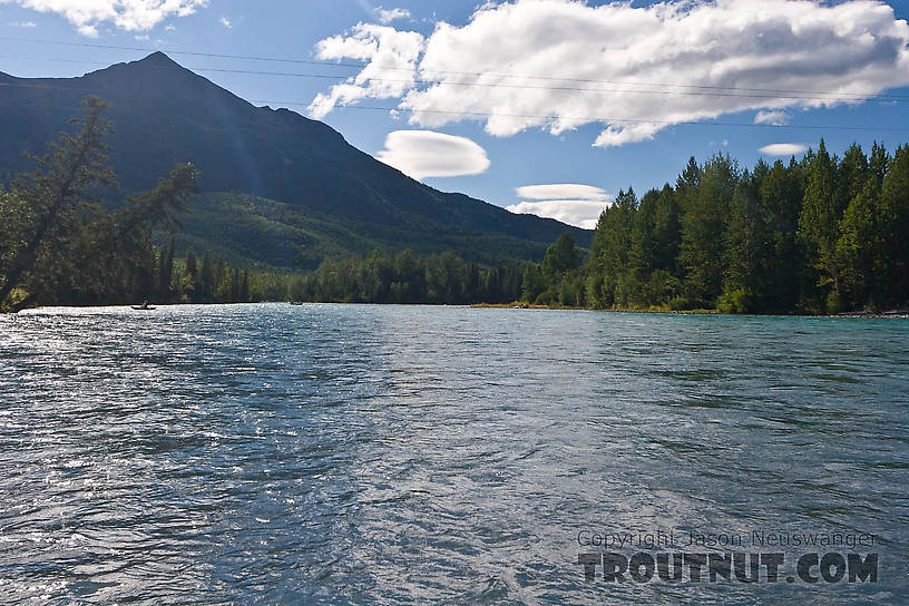 From the Kenai River in Alaska.