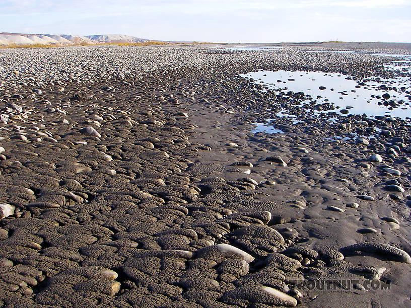 "A muddy, mile-wide cobble bar on the very lower Sagavanirktok (or ""Sag"") River. From the Sagavanirktok River in Alaska."