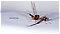 Male Leptophlebia cupida (Borcher Drake) Mayfly Dun