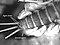 Rhithrogena virilis  Mayfly Larva