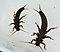 Pteronarcys californica (Giant Salmonfly) Stonefly Nymph