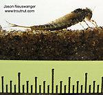 Siphlonurus quebecensis (Gray Drake) Mayfly Nymph