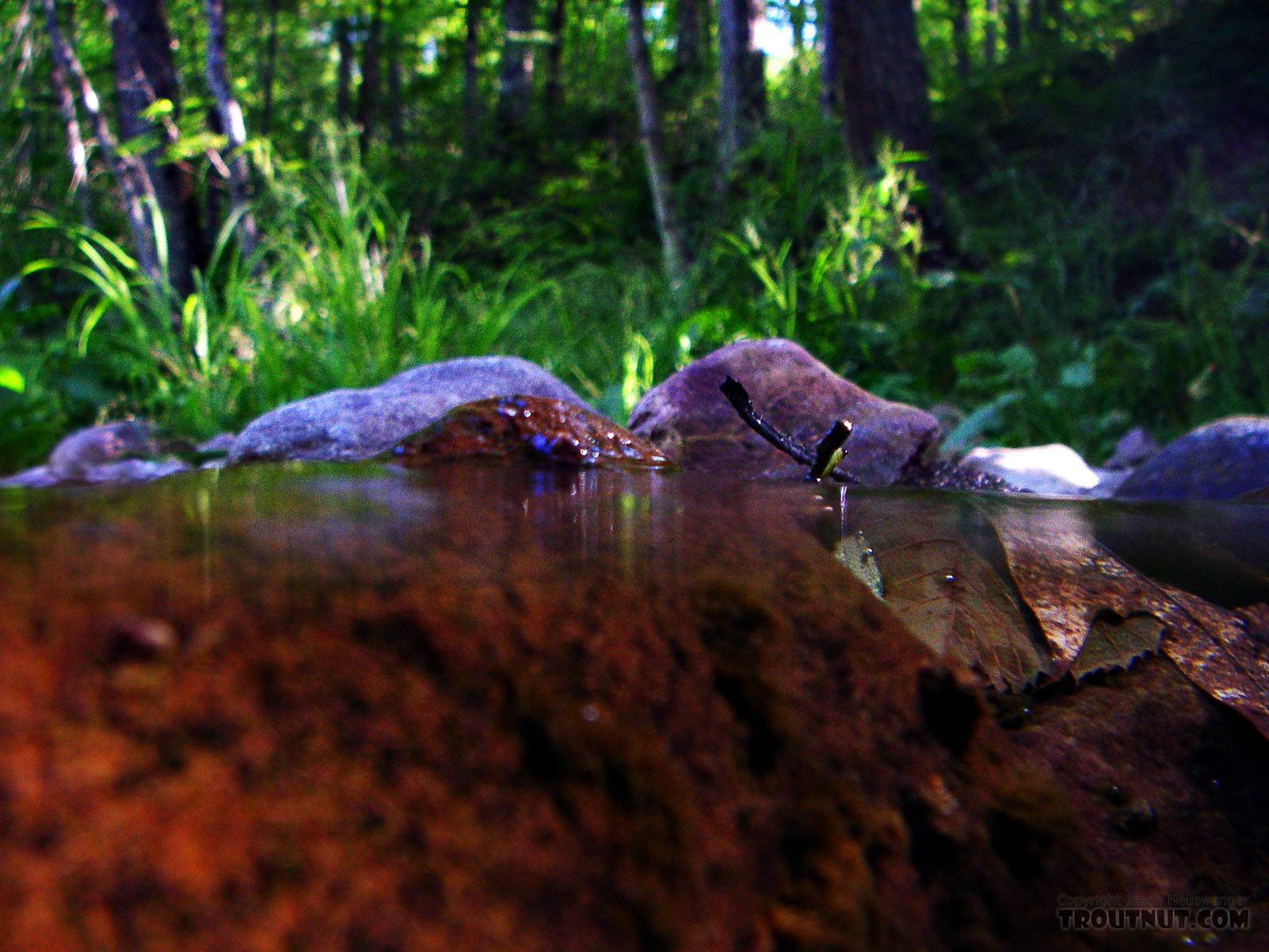 Above and below a small brook trout stream. From Spring Creek in Wisconsin.