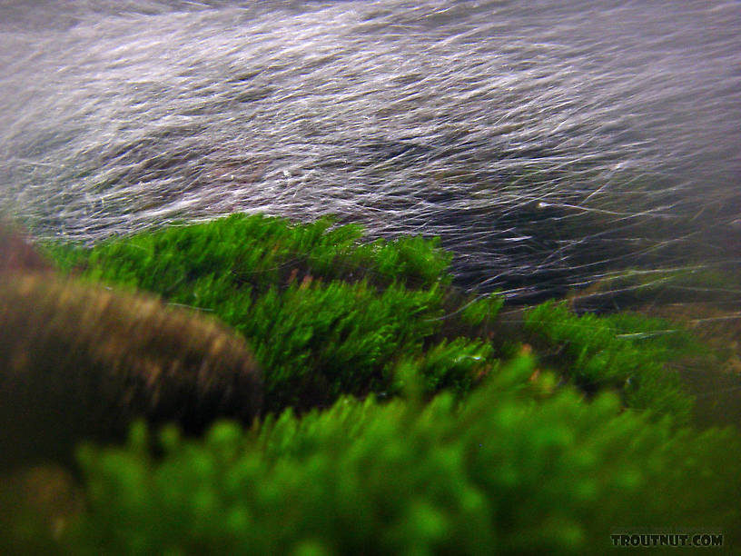 Underwater moss and riffle bubbles. From the Mystery Creek # 23 in New York.