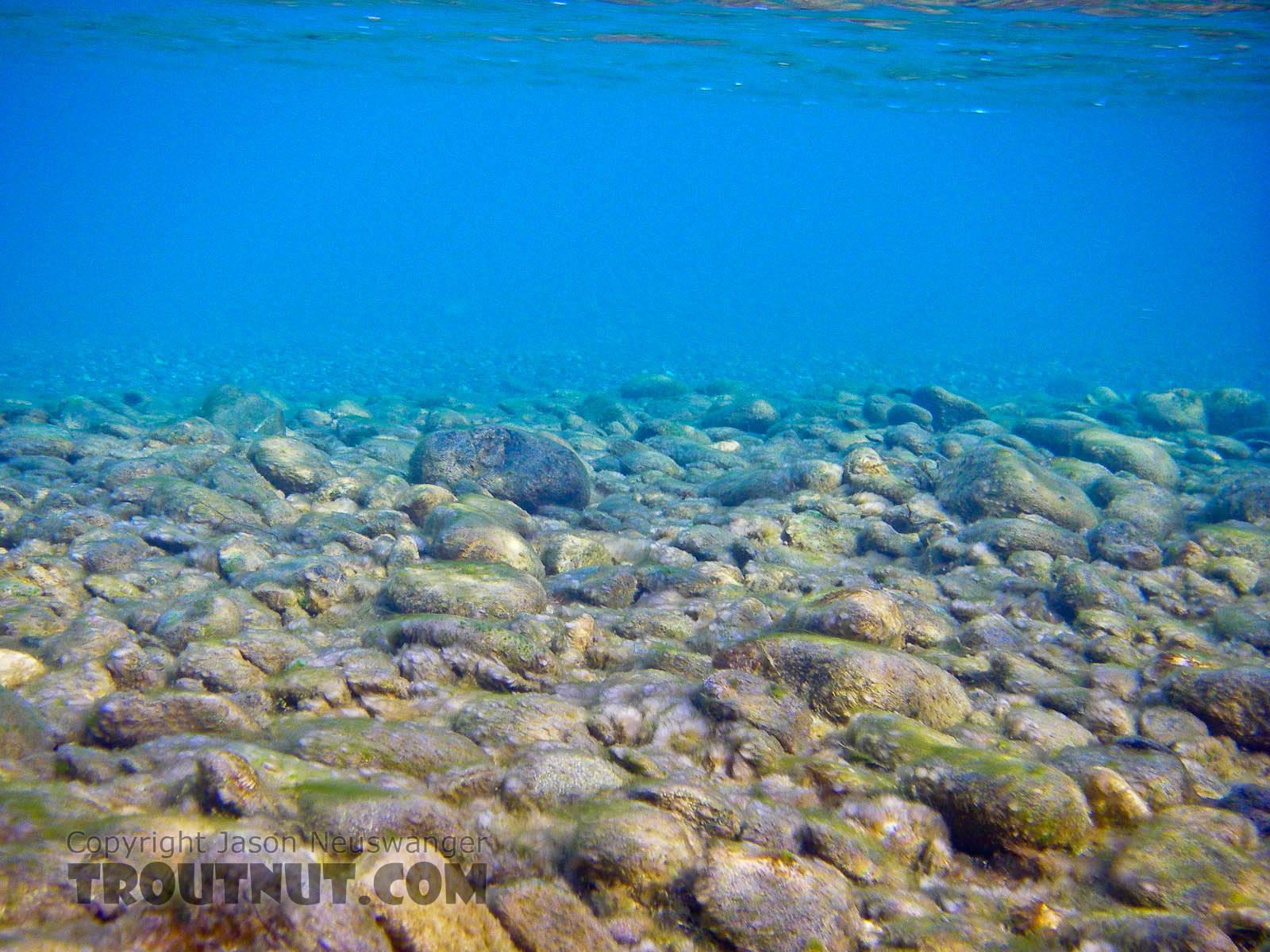From the Sagavanirktok River in Alaska.