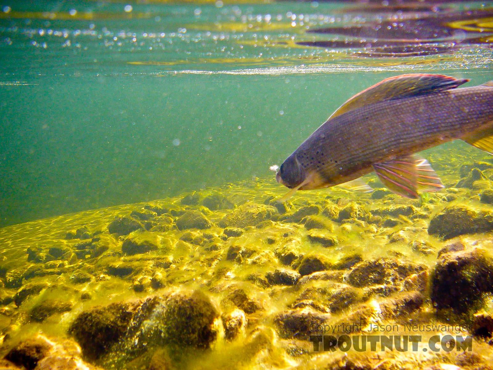 From Fish Creek in Alaska.