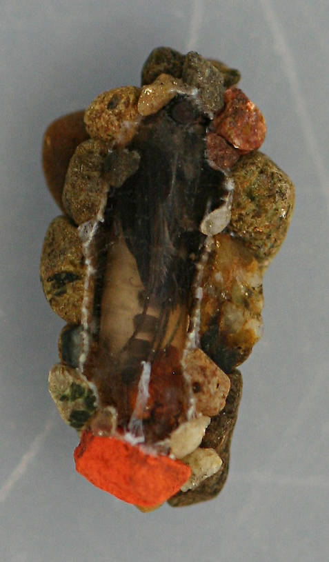 Ventral view of case above. Pupa 8 mm. August 16, 2014. Live specimen.