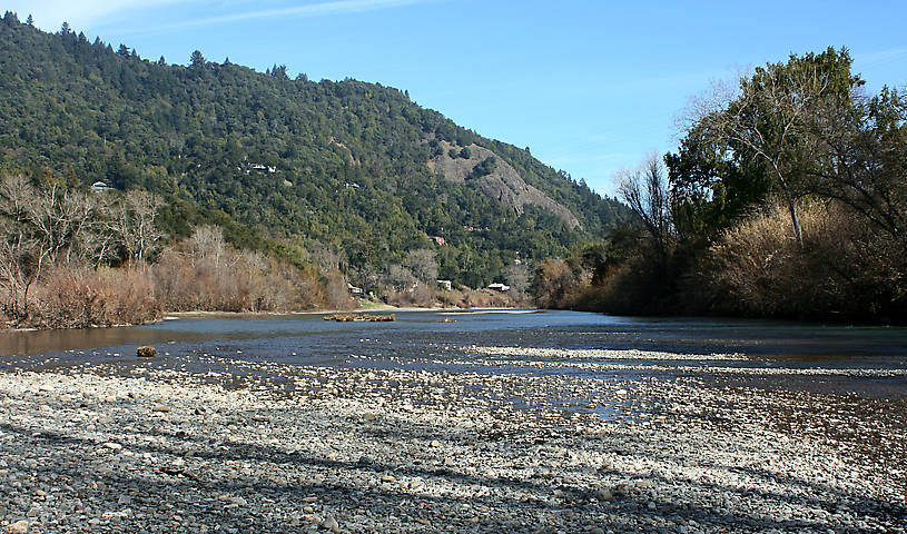 Area of the Russian River where the nymphs were collected.