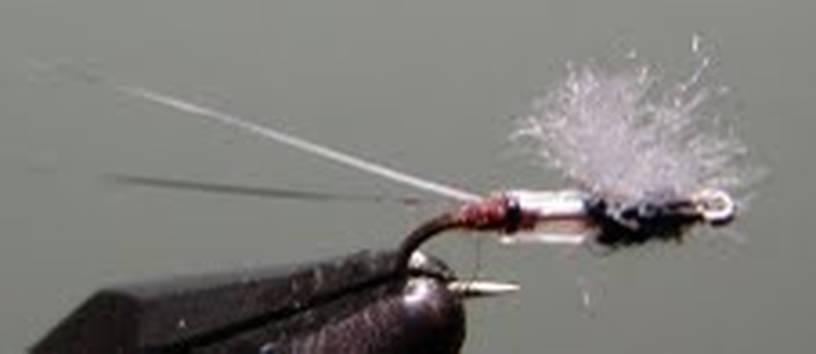 bruce's fly