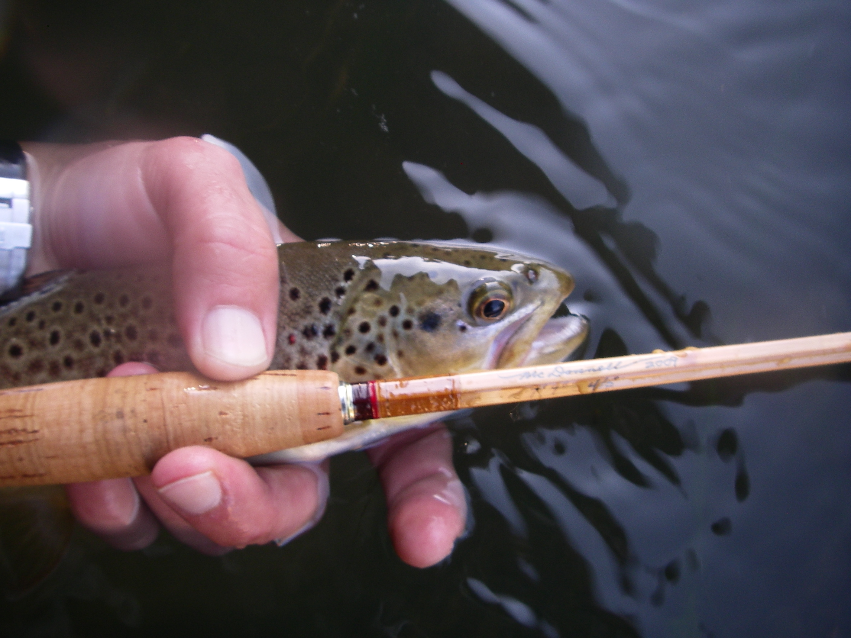 Is there anything better than tricos, 7x, bamboo and wild browns?  Add Bruce, Goose, Lastchance, Feathers5 into the mix, and it's always a great time!