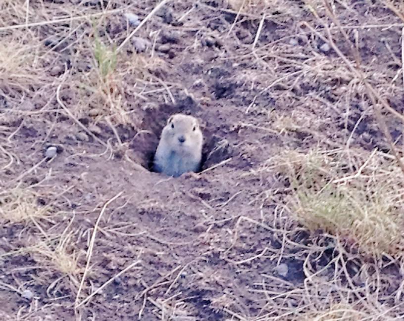 My buddy Petey the Prairie Dog.