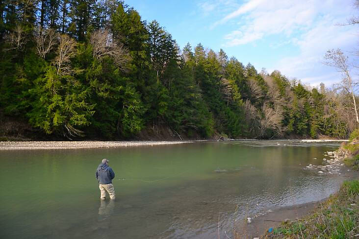This is a picture of Cattaraugus Creek so you can get an idea of the size of it. It is a gorgeous river (they call it a creek but it is big water that could suck you down in a heartbeat) Check out cattaruagusoutfitters.com if you want to see more pictures of the river and some awesome steelhead.
