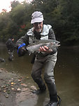 Steelhead October 2018 (by Wbranch in Fishing Reports)