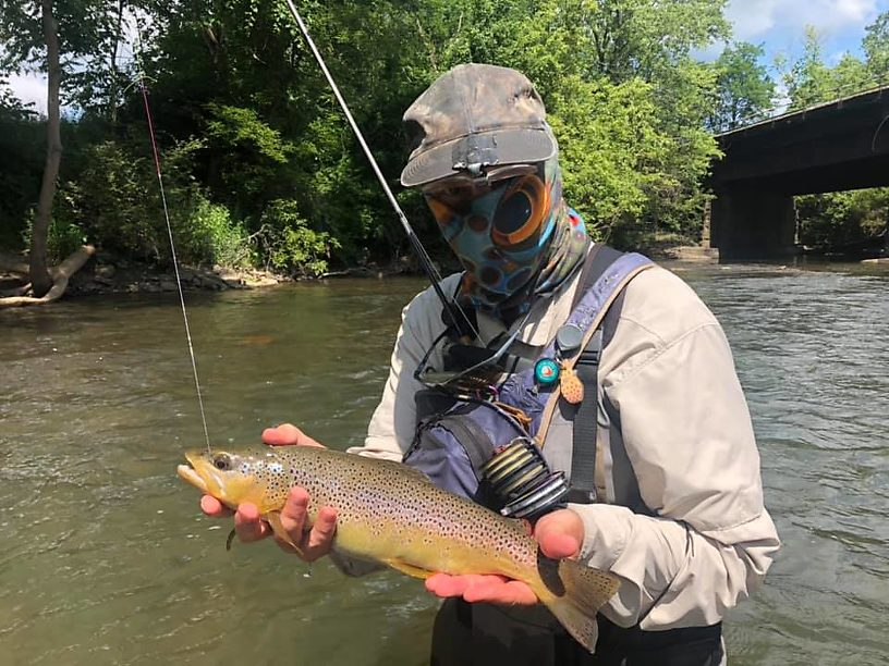 Another brown on a nymph