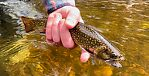 May in the Mason Tract (by Summer_doug in Fishing Reports)