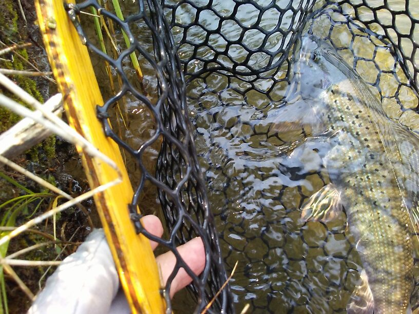 Wet and in the net.