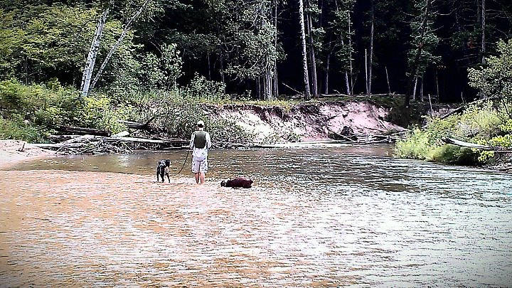 Fishing the Pine River (with some help from my two dogs)