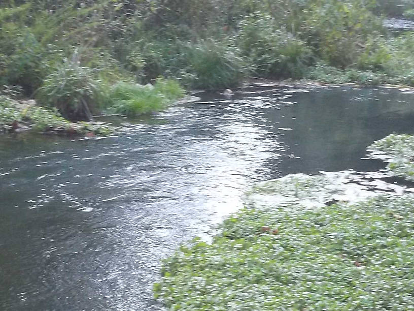 Sorry for the low quality photo.....but this is the catch and release stream in Montauk State Park.