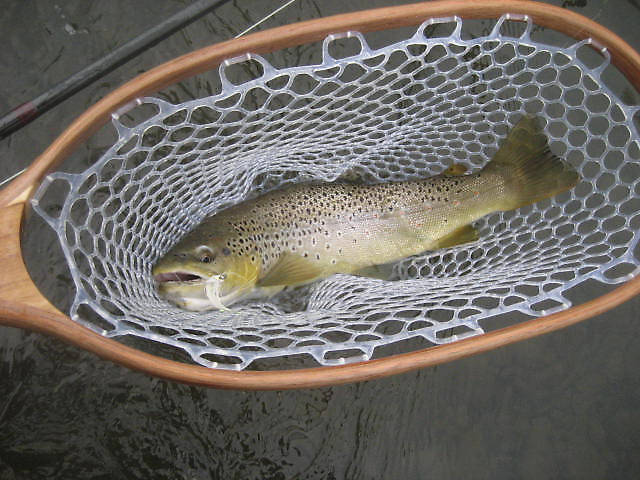 "Another very nice streamer caught brown of about 18""."