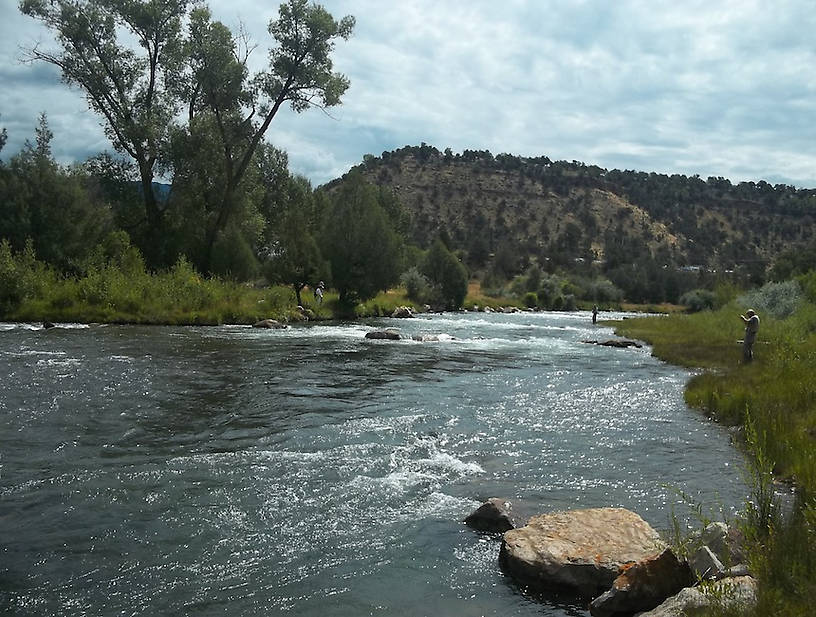 Being a good Colorado tailwater with ample access, the Uncompahgre gets its share of fishing pressure.