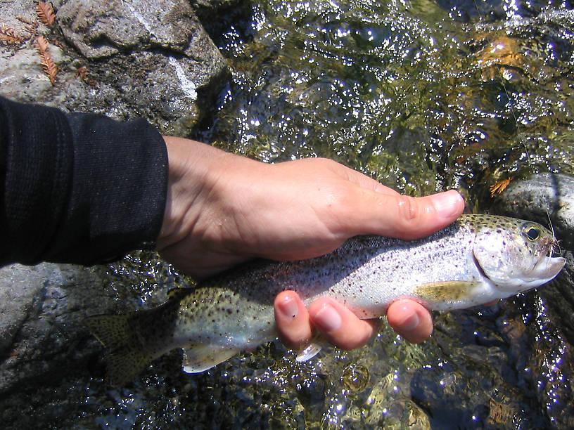 Big sur for Big sur fishing