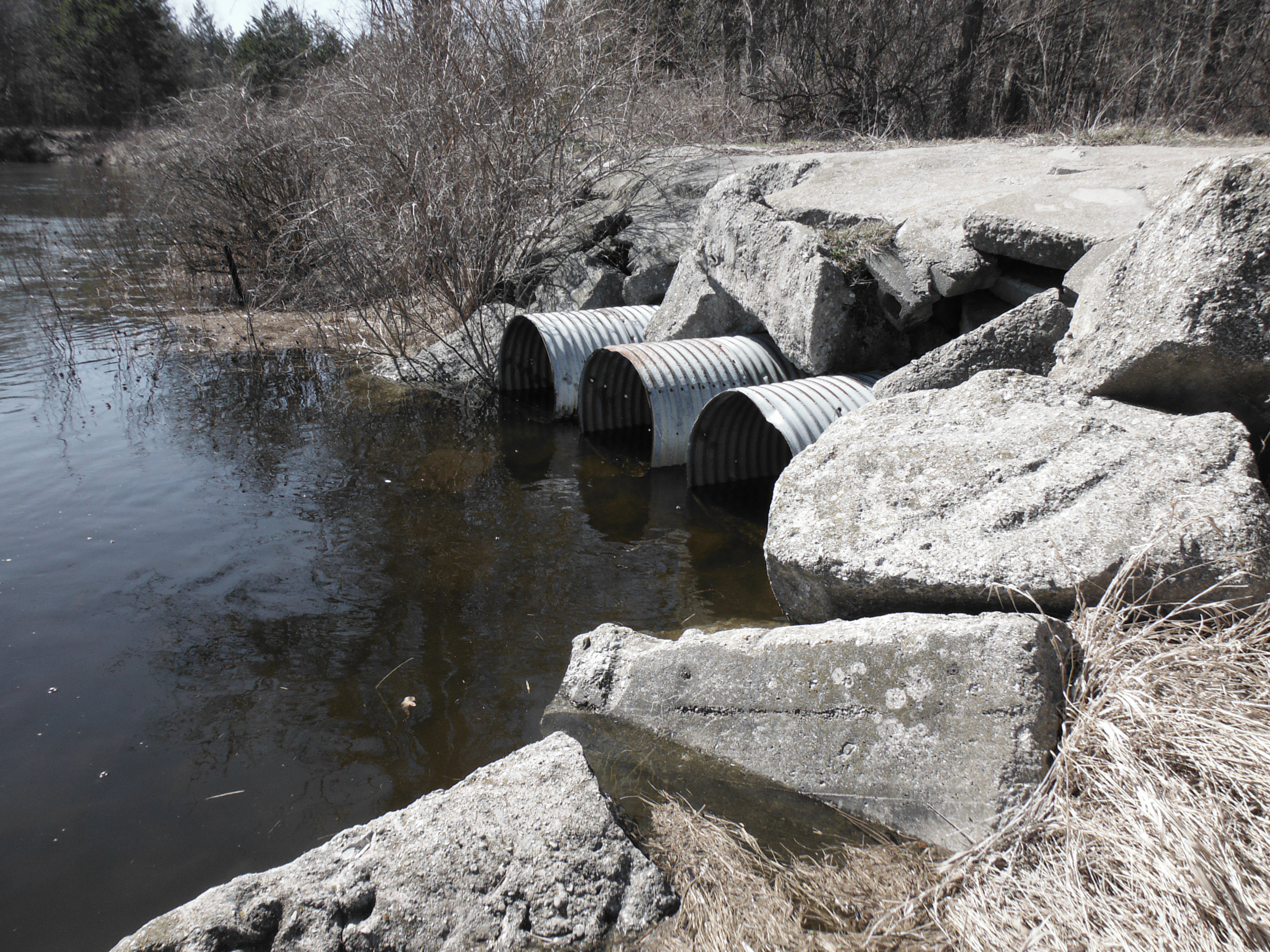 The Au Sable is up!  There will be some steelhead stuck in this little creek soon...