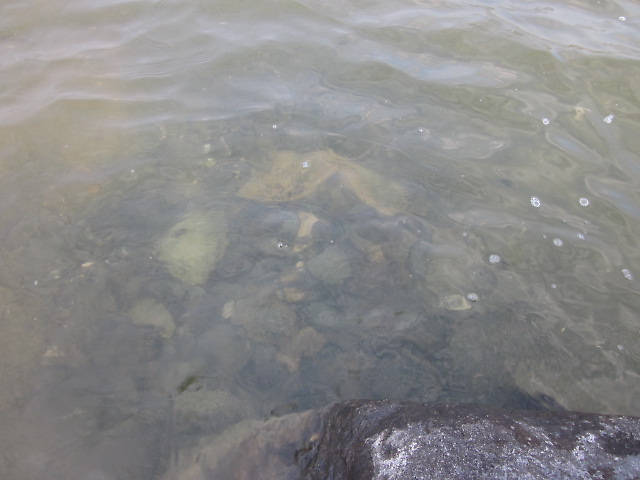 One of the spawning beds.