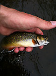 Au Sable River Fishing Report: Combined  (by Oldredbarn in Photography)