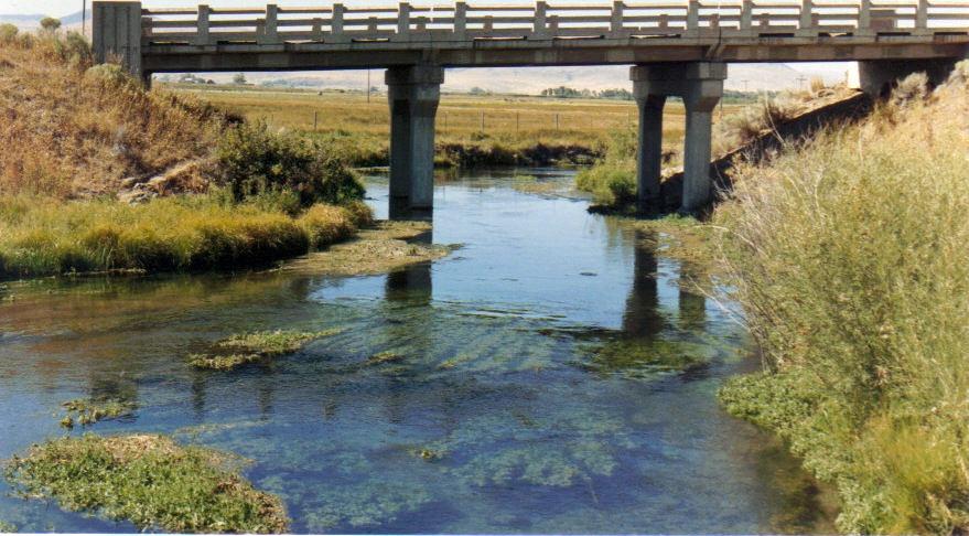 A wonderful SW Montana spring creek.