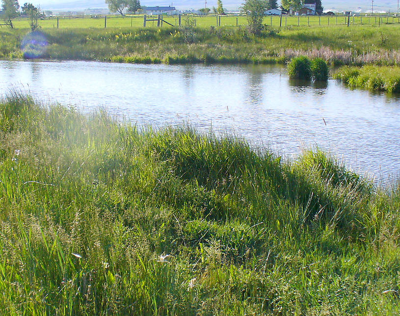 Upstream from the bridge pool