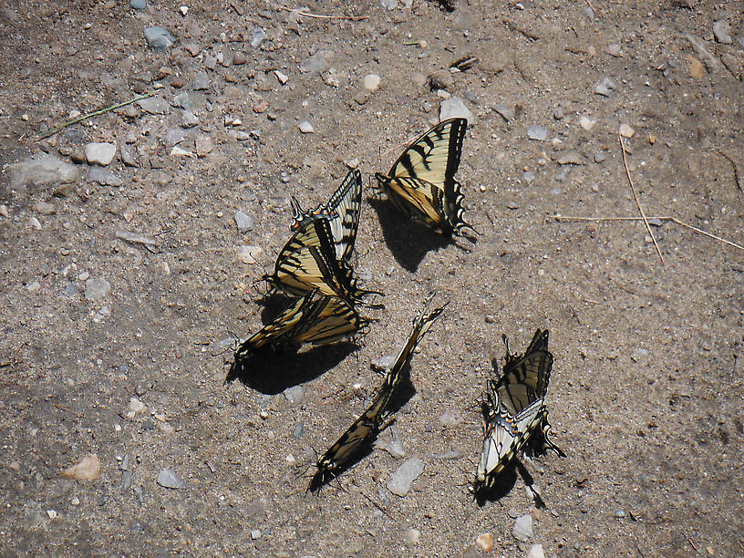 More butterflies, there were several dozen of them!