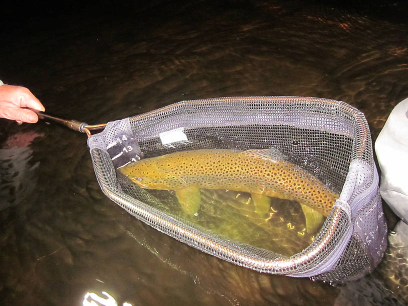 "23"" South Branch Au Sable Brown...Way to go John!"