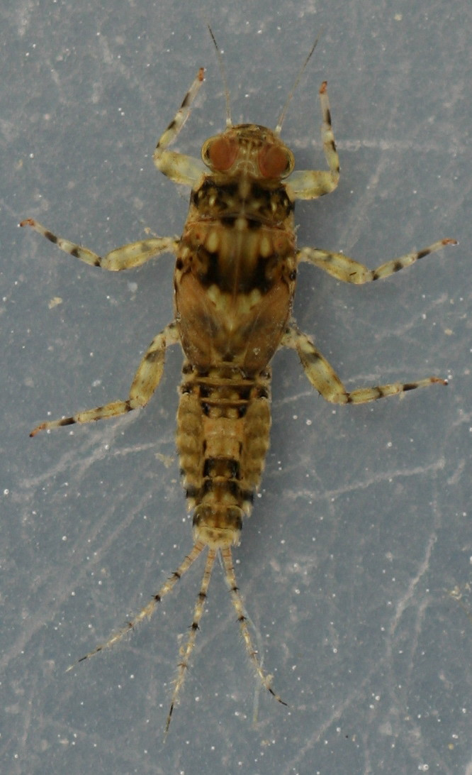 Male. Collected May 4, 2014.