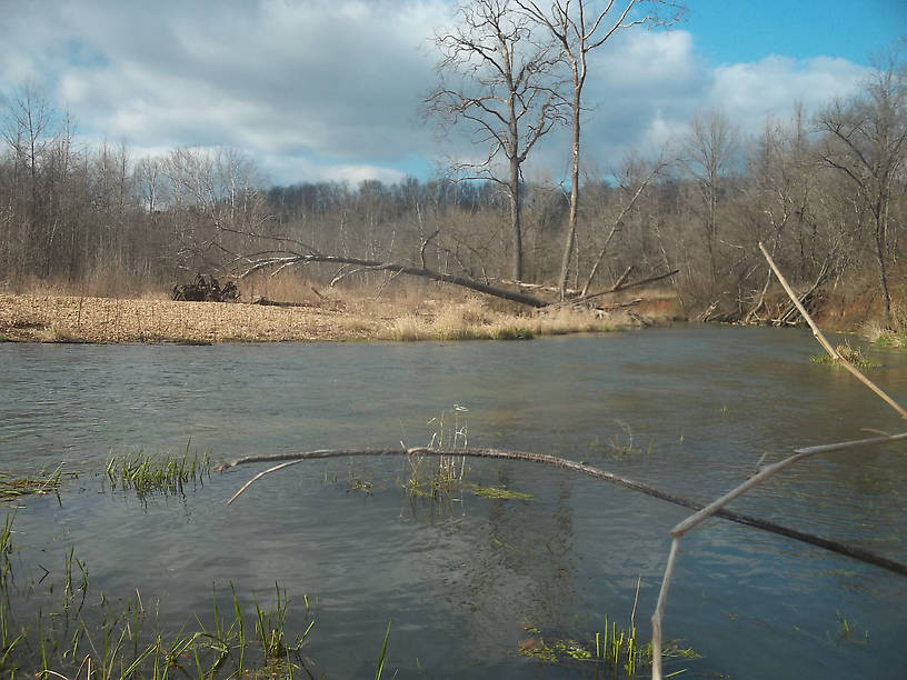 The stream was looking less like a little spring-creek today, and more like a river.