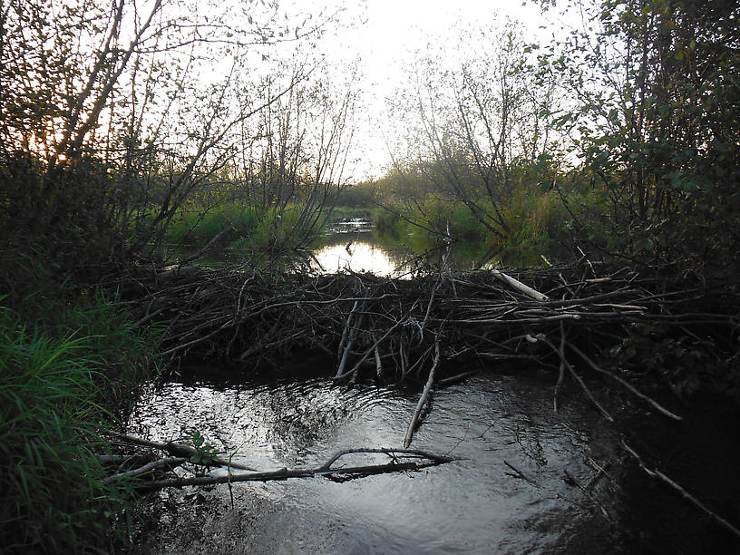 AHA!!!  Beaver ponds!!